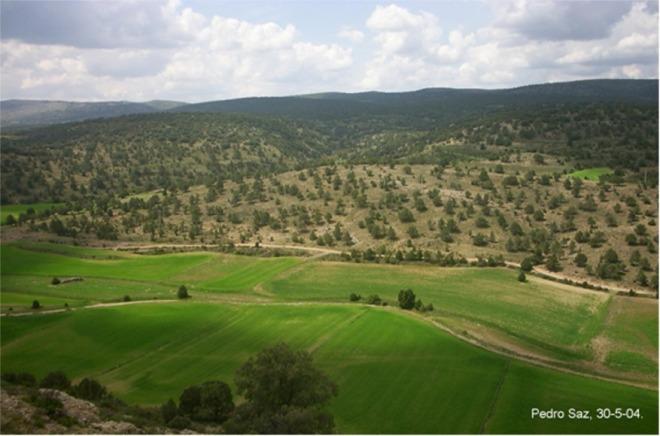 Vista del sabinar en Valverde desde El Portillo.